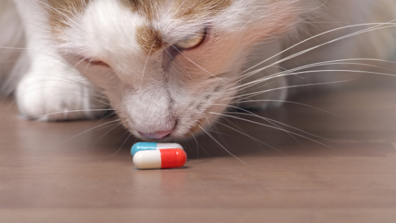 Why Your Pet Will LOVE Compounded Medications